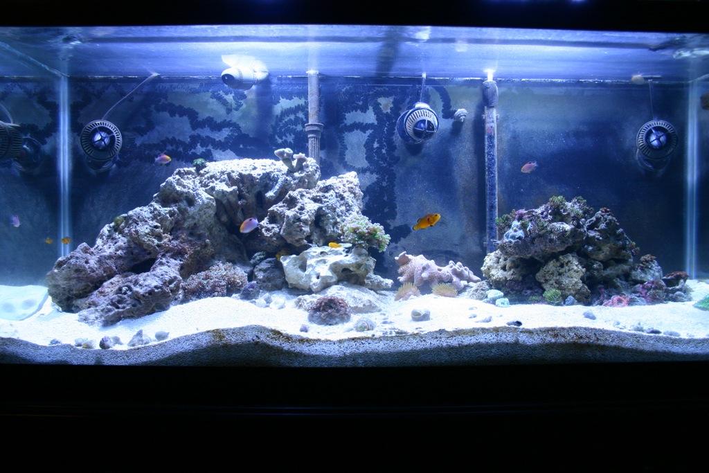 Jamesl S 75g Blog Page 2 Tank Builds Austin Reef Club